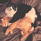 Kitty Cat Cuddle by Ann Marie Hoff