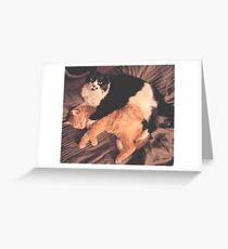 Kitty Cat Cuddle Greeting Card