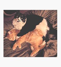 Kitty Cat Cuddle Photographic Print