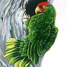 Red Crowned Parrot by roxygen