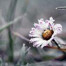 Frozen beauty by SylBe