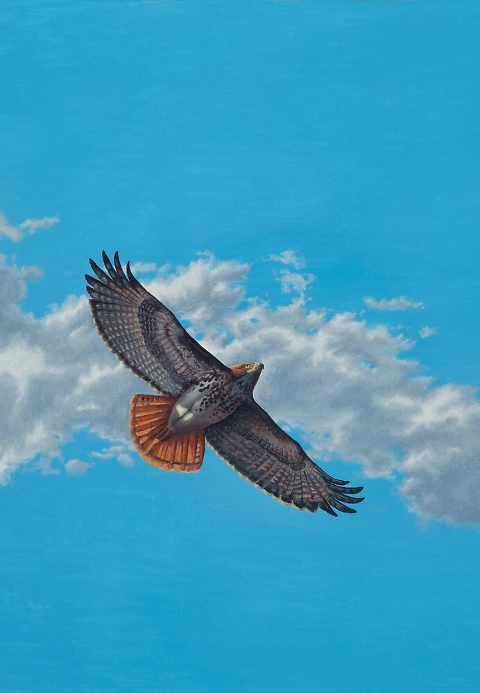 """""""Freedom on the Wing"""" Red tailed Hawk in Flight by Reed Prescott"""