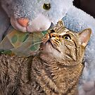 The cat and the rabbit by Deri Dority