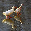 Walking on Water by Susan Blevins