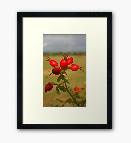 Rose Hip Berries Framed Print