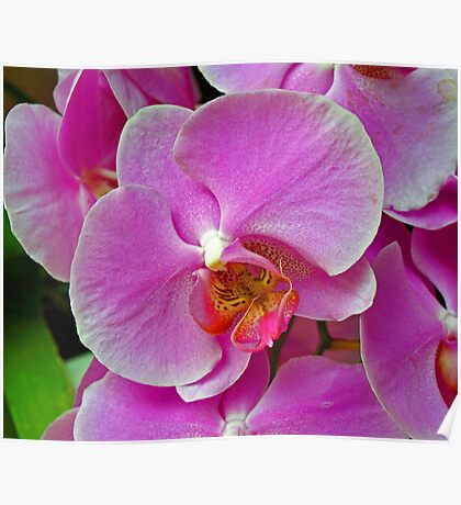 Purple Orchid. Poster