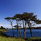 Helford Estuary by AndyReeve