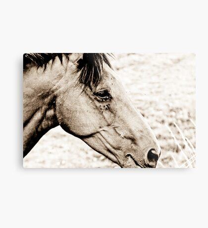 Equus III Metal Print