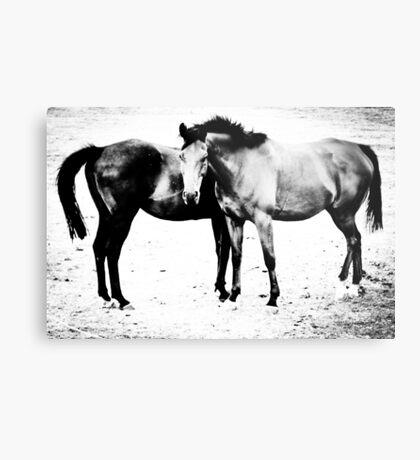 Equus II Metal Print