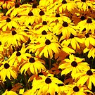 Black Eyed Susans by Devalyn Marshall