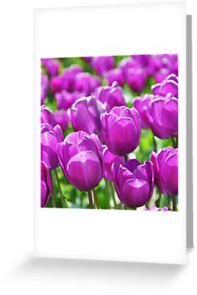Purple Illumination by Emilie Trammell