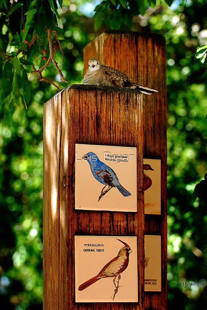 A Lifelike Sign by Lois  Bryan