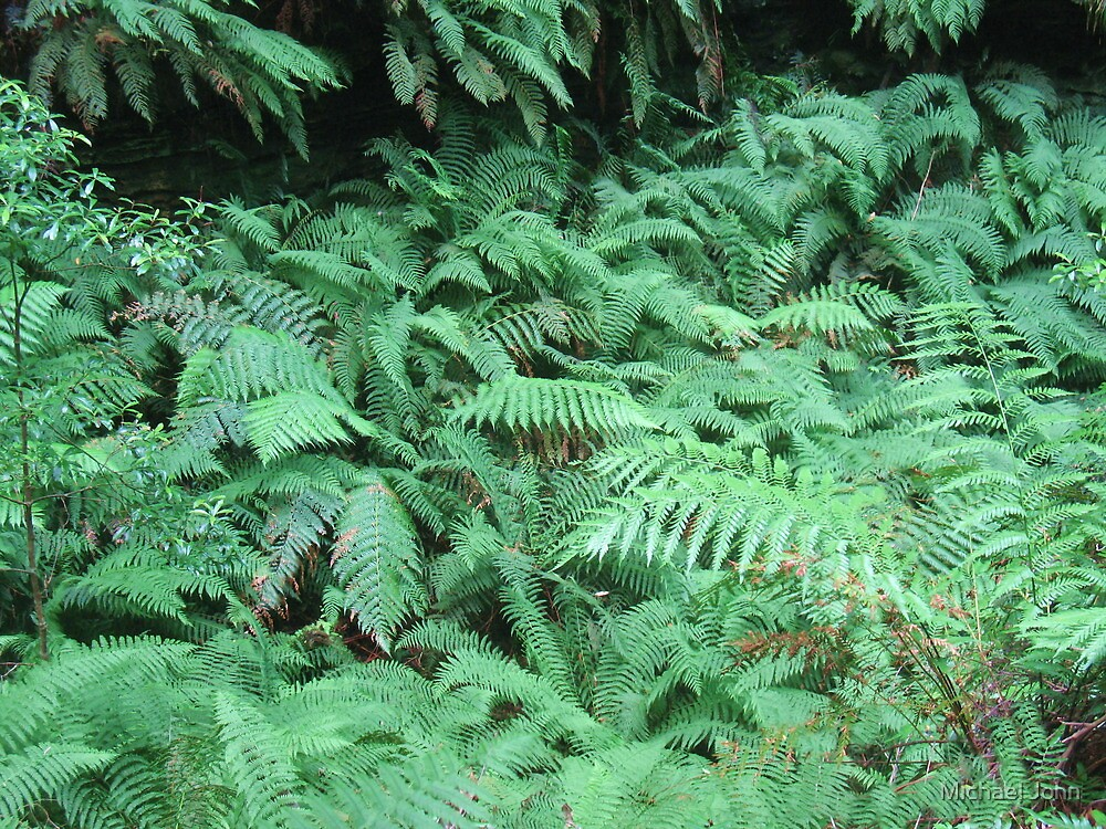 Gorgeous Green Gully of Feathery Fern Fronds by Michael John