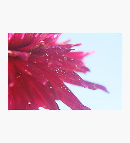 Glimmer Photographic Print