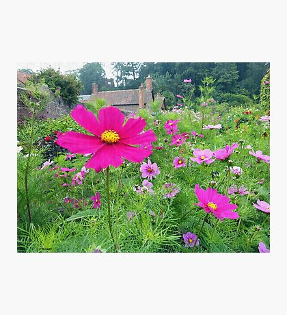 Cottage Garden Photographic Print