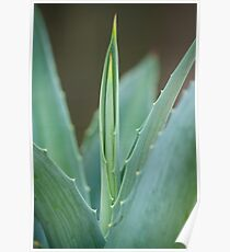 A Needle of Aloe Poster