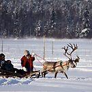 Reindeer Ride by Katariina Lonnakko