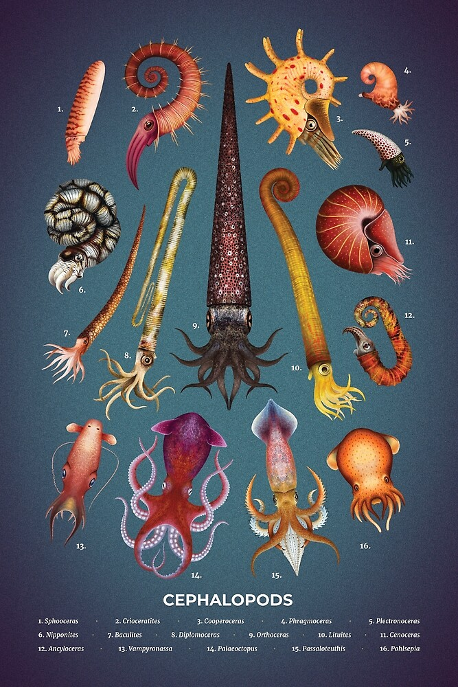 Cephalopods Plate by Franz Anthony