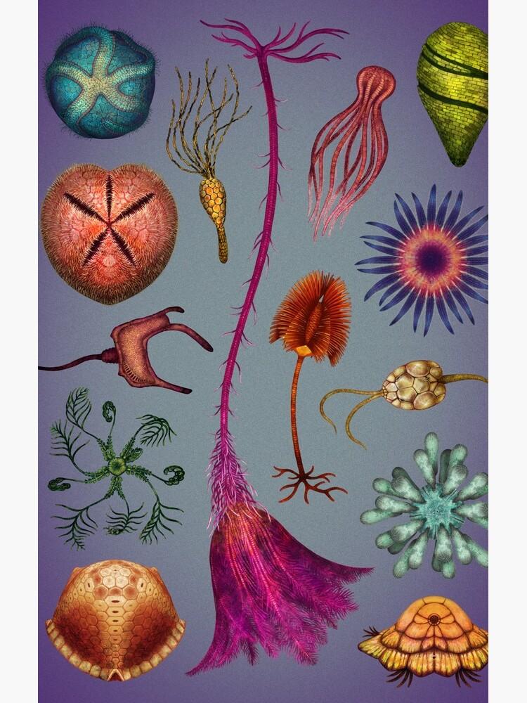 Echinoderms Plate by franzanth
