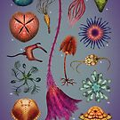 Echinoderms Plate by Franz Anthony