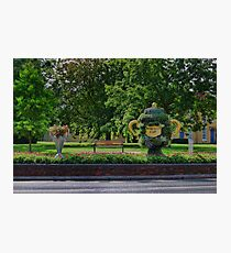 Rugby world cup flowers Photographic Print