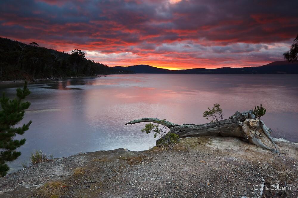 Sunrise Near Ninepin Point, Tasmania #11 by Chris Cobern