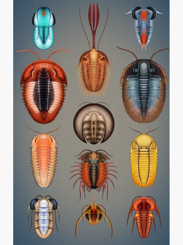 Trilobites Plate by franzanth