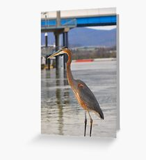 lookin for fish Greeting Card