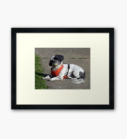 Say,WHAT? Framed Print