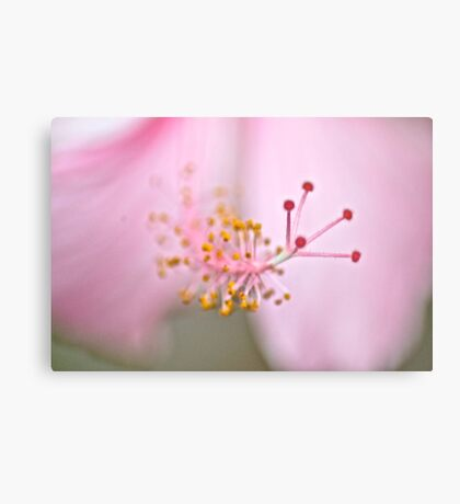 This blur moment make splendid image...: On Featured: Petals-and-pollen Group  Metal Print