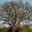 A Tree, tree group, eat your heart out! by dougie1