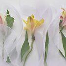 Lilies 2 by Sandra Guzman