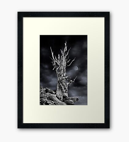 The ghost of Pinus longaeva 2. Framed Print