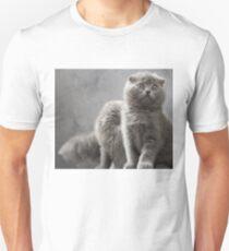 Scottish Fold kittens T-Shirt