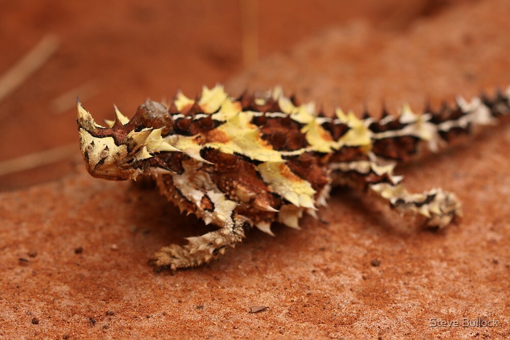 Quot Thorny Devil Quot By Steve Bullock Redbubble
