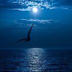 seagull by hayrettinsokmen