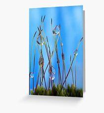 Macro moss Greeting Card