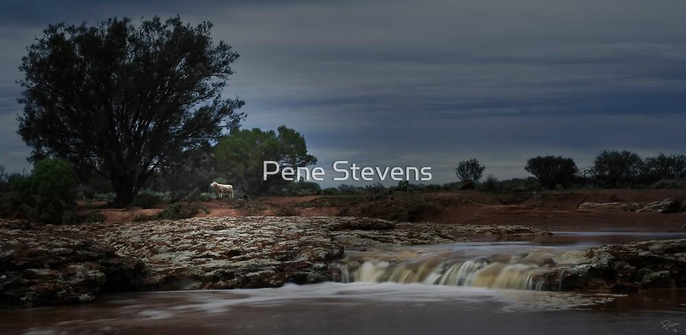 Lone Sheep Falls by Pene Stevens