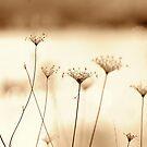 dreaming seed dance... by Allan  Erickson