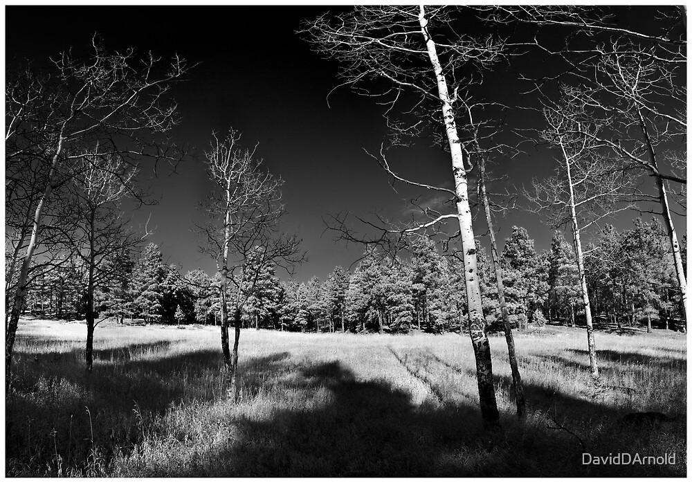 Field of Vision by DavidDArnold