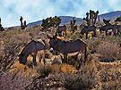 Desert Burros by Cathy Jones