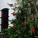 Window of Camelia's by Debbie Robbins