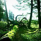 Fairy Land by Lady  Dezine