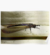 Antlion Lacewing Insect ~ 2 Poster