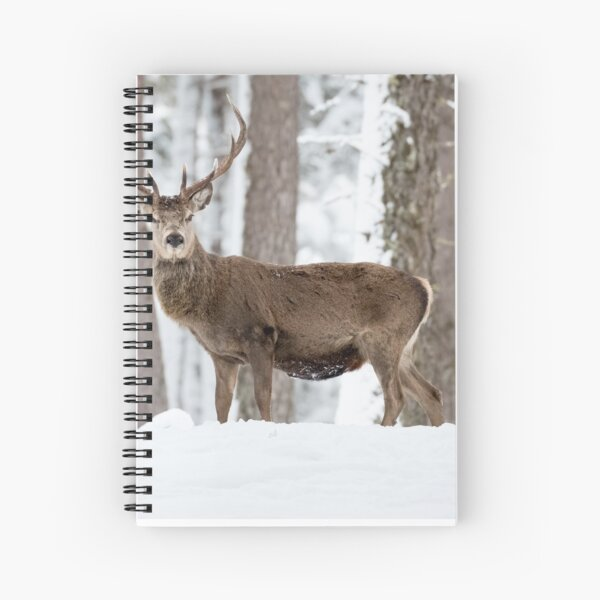 Red deer standing stag Christmas  Spiral Notebook