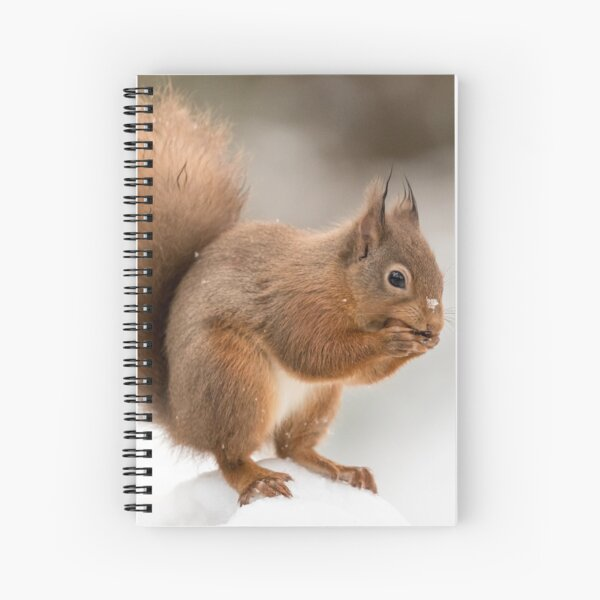 Red squirrel in the snow at Christmas  Spiral Notebook