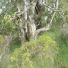 Wooli bushland by Virginia McGowan