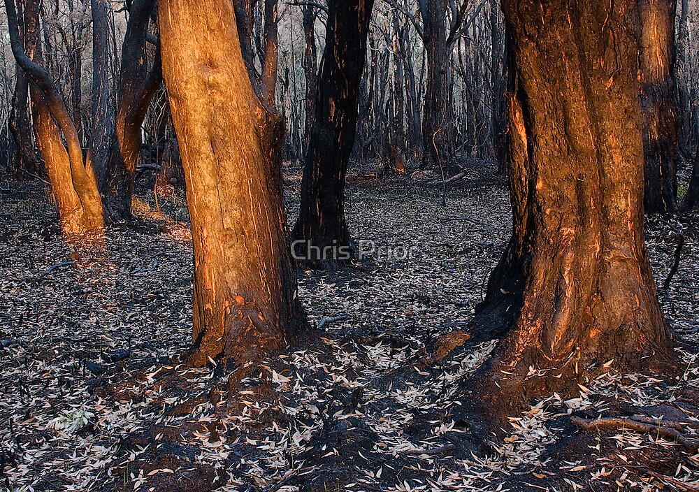 Australian bushfire aftermath by Chris Prior