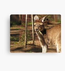 Taking a quick snack Canvas Print