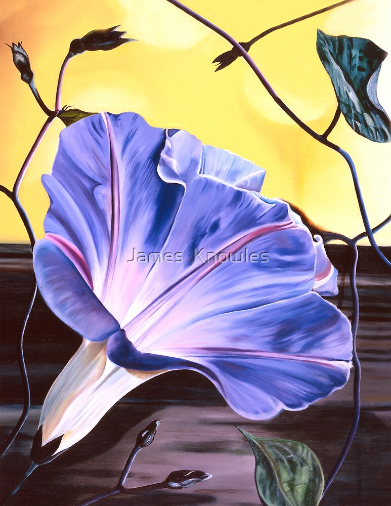 Quot Quot Morning Glory Quot Oil Painting Of A Purple Blue Trumpet